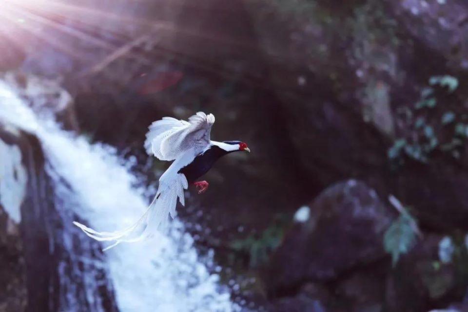 """永泰有个观鸟基地,在这里可以一睹珍稀鸟类""""芳容"""""""